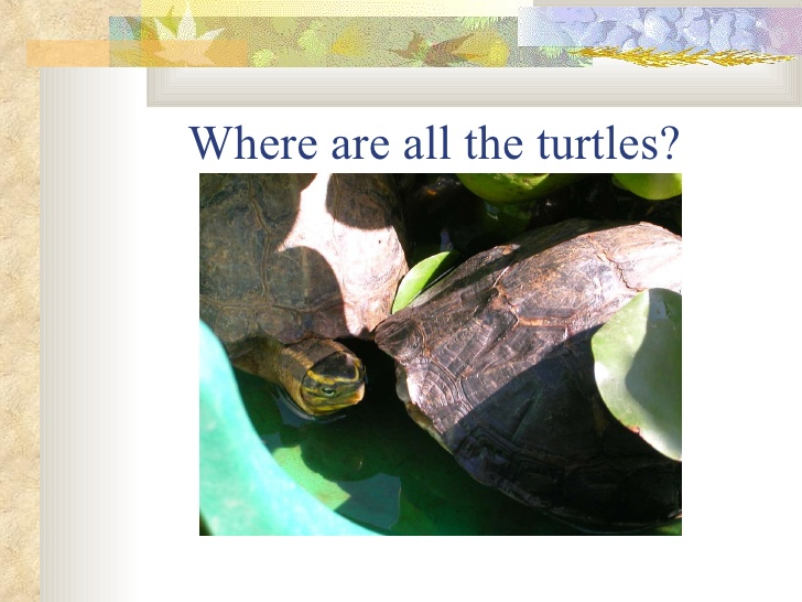 where-have-all-the-turtles-gone-1-728